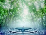 Morning Droplet wallpapers collection free
