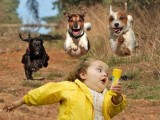 dog and baby wallpapers
