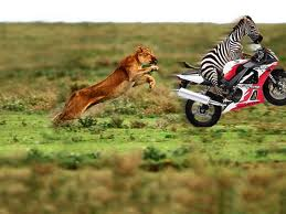 Tigers latest funny wallpapers for free download