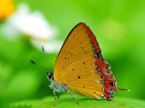 Butterfly Wallpapers Collection 2013