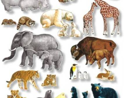 World Animal Day being Observed All over the World