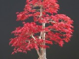Beautiful Tree pictures