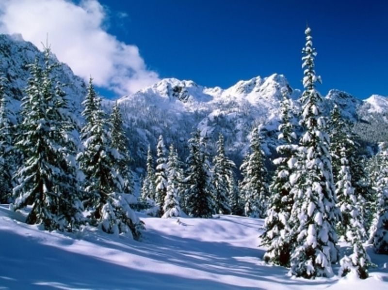 Nature wilderness backgrounds