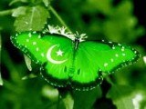 Beautiful Pakistan day pictures