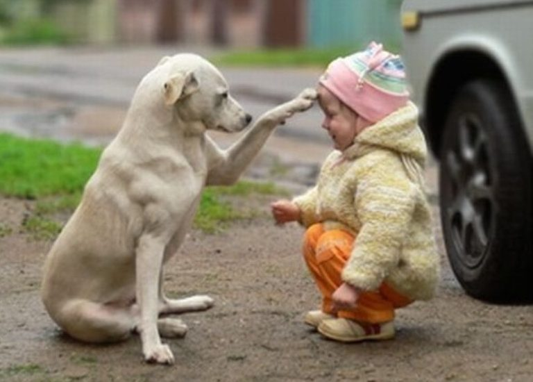 baby pic wallpaper with dog