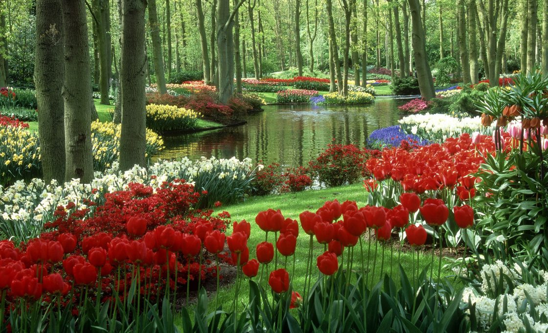 nature flower beauty pictures wallpapers