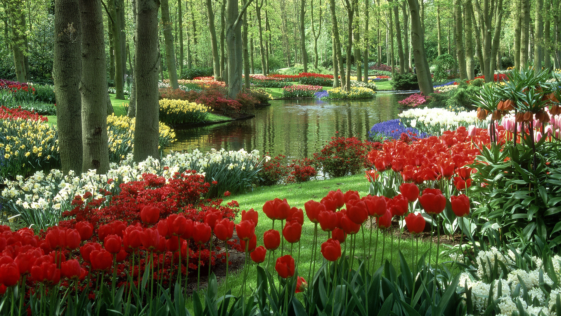Hd Beautiful Nature Wallpapers Desktop Backgrounds Free Download Donpk